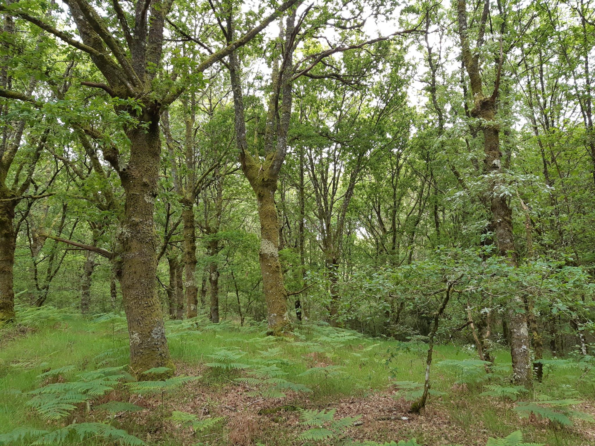 Parque Central de Galicia en Antas de Ulla